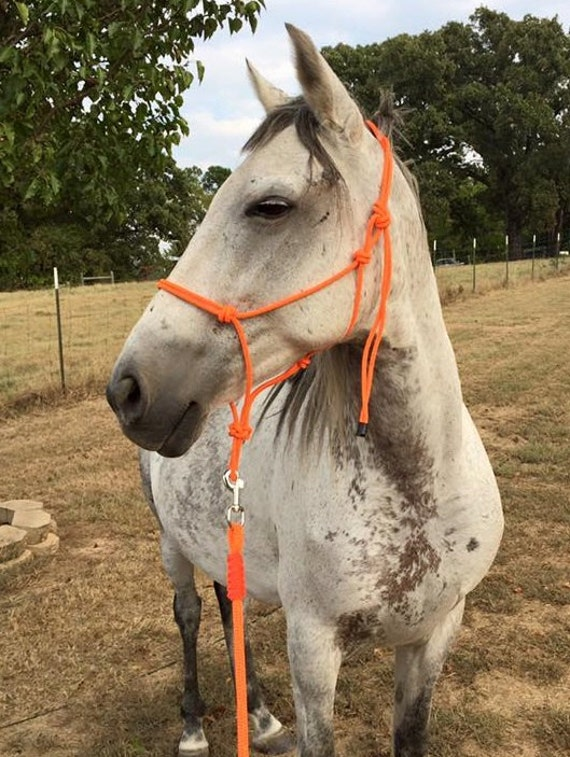 Blaze Orange 2 Or 4 Knot Rope Halter By Countercanterdesigns