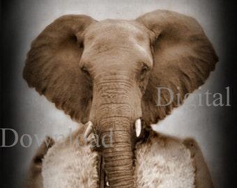 Mrs. Elephant Digital Download Photo