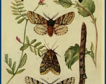 Moths of the British Isles Vintage Book Collection on CD 12 British Moths Rare Antique Old Books
