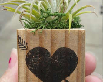 Air Planter with Air Plant, reclaimed wood cube, handmade, plant included