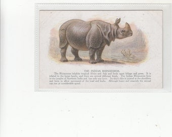 The Indian Rhinoceros 1920s British Artistic Postcard
