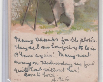 Helena Macguire? Undivided Dog Postcard With His Camera And Tripod