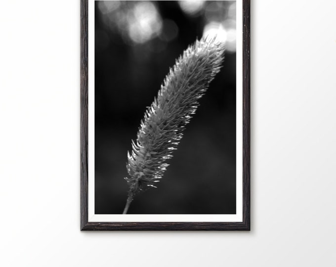 Printable art Black and white prints Fine art photography Nature Photography Large photo print Grass Photograph Wall Poster Summer plant