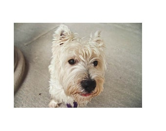 "Westie Gift Book -- ""POLITICAL ANIMAL"" --  Coffee Table Book -- Printed Artist's Book -- Dog Book -- Dog Lover's Gift"