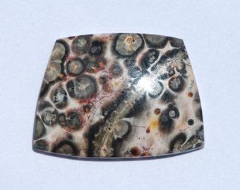 Leopard Skin Jasper, Trapezoid 25 x 19mm, Tan, Pink, Black, Excellent Polish, C2345