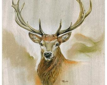 Red Deer | Original Drawing | 11 x 11 inch | 28 x 28 cm