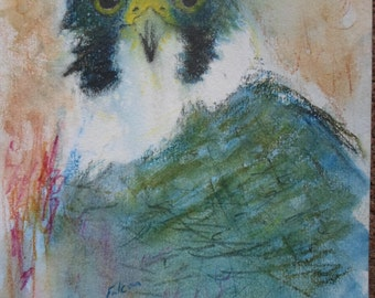 Peregrine Falcon Greetings Card
