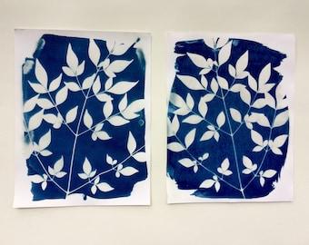Cyanotype Botanical Prints: Set of Two