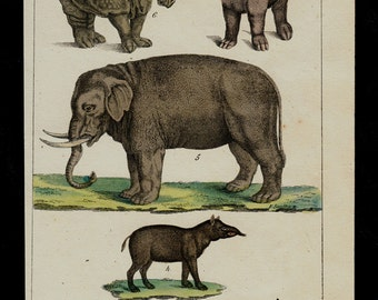 1833 Antique ANIMAL print, mammals, Elephant, rhinoceros, tapir, wild board, hand colored engraving