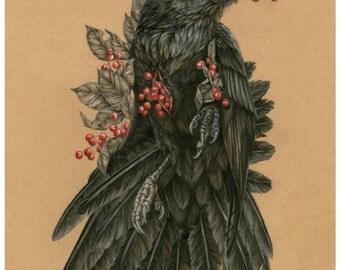 The Quietus of Munin -11 x 14 reproduction of original drawing- Raven artwork