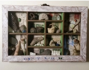 Curio Box Wall Hanging Cottage Chic Nature 3D Assemblage Art with Found Objects Shells Stones Flower Pods Deer Teeth Taxidermy Reptiles Keys