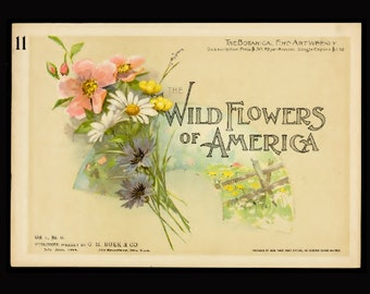 Printable Vintage Flower Book: Wild Flowers of America Volume 1, No. 11 Flowers of Every State in the American Union ~ scanned to PDF ebook