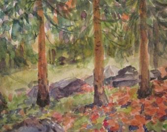 Fall Trees in Canada