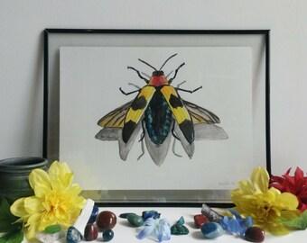 Jewel beetle 2/5