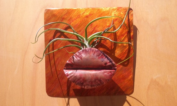 Metal Wall Art Copper Air Plant Holder Display 51/2 X 51/2 inch Orange with Air Plant