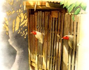 Chicken Coop (Print)