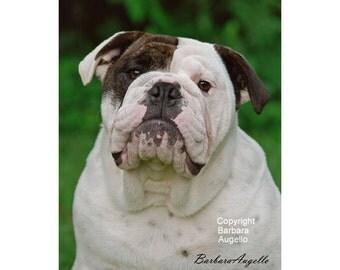 English Bulldog Flag, English Bulldog Art, English Bulldog Gift