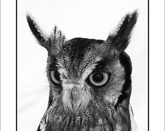 Owl - Greeting Card (Wild 2)