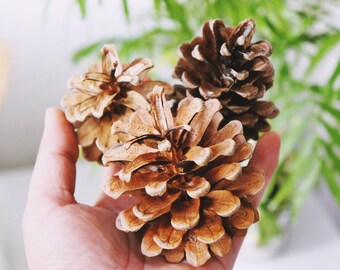 20 X pinecones | dried Potpourri | Natural dried pinecones | pinecones are a great decorative accent| Christmas decor, craft supply pinecone