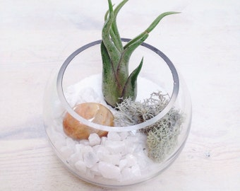 Crystal Air Plant Terrarium Tillandsia Kit (in fishbowl vase OR hanging globe)~ personalised gift leo birthstone birthday customise planter