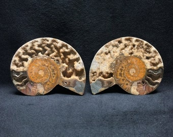 Ammonite Fossil Pair - Two halves of a whole