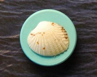 Seashell Magnet 14