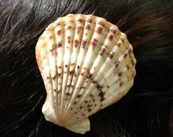 Seashell Barrette