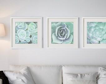 Plants print, Minimalist, Houseleek, Beach art, Nature, Modern art, Wall art, Digital art, Printable, Digital poster Instant Download 20x20