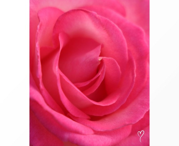 Pink Wall Art of Rose Petals, PINK ART PRINT, Pink Home Decor, Pink Flower, Floral Photography, Fine Art Photograph, Pink French Rose