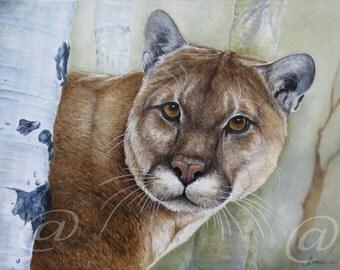 original, oil, painting, cougar, mountain lion, puma, cat, animal, wildlife, fine art, realistic, nature, Jan Brown