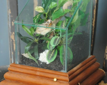 Vintage Musical Glass Terranium/Display Case/ Very Nice/Wood Base/Glass Display Case/Terranium with Bird and Faux Greenery/The Carpenters