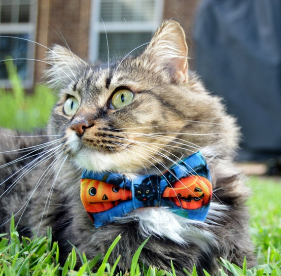 cat pumpkin bow tie