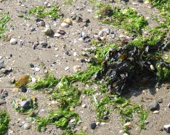 Beach combing, Welsh Seaside Photography, Swansea