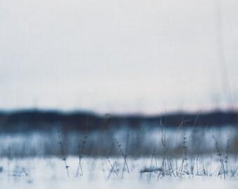 Postcard, photograph, fine art photograph, grass, wild, mood, beautiful, winter, season, landscape, snow, Finland, Scandinavia