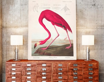 John James Audubon, Birds of America, American Flamingo, Vintage Art Print, Audubon Flamingo, Nature Art, Vintage Art, Bird Prints, Tropical