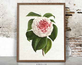 Botanical Camellia Print, Flower Illustration, Pink Wall Art, Printable Poster, Digital Download, Shabby Cottage Chic Decor, French Country
