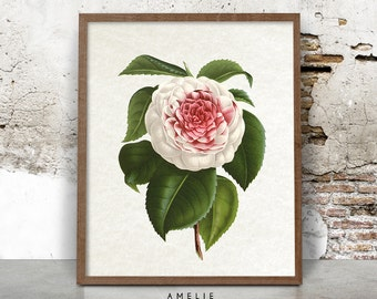 Printable Botanical Camellia Flower Illustration, Wall Art, Gift for Her, French Country Farmhouse, Cottage Chic, Instant Digital Download
