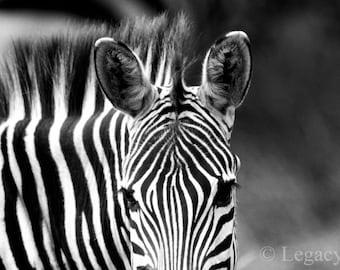 Animal Photography, Zebra, Photo,Wildlife, Photography, Black And White, Safari, Africa, Animal, Photograph, Nursery, Wall Art, Fine Art