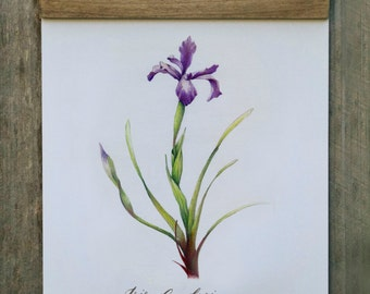 Wall Hanging, Wall Art, Home Decor, California Wildflower, Botanical Illustration, Wood Trimmed, FREE SHIPPING