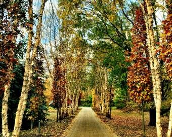 Golden Path, Fine Art Print, Large Art, Landscape Photography