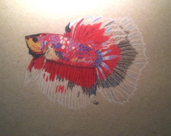 Halfmoon Betta Fish Drawing