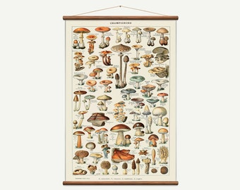 Vintage pull down chart of Botanical Muchrooms. High Quality Handmade vintage art