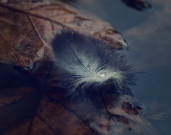 Leaves Digital Photo - Feather Photo - Fall - Puddle - Cold Colors - Square - Nature Photo - Digital Photo - Digital Download - Wall Decor
