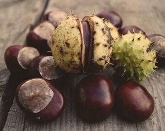 Chestnuts - Chestnuts Photo - Still Life - Farmhouse Kitchen - Digital Photo - Digital Download - Instant Download - Farmhouse Kitchen Decor