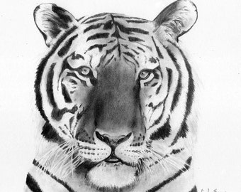 Tiger 8x10 charcoal print picture black and white art Tiger wall art Tiger art print Tiger picture Tiger drawing