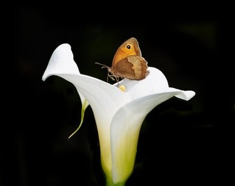 Blank Greetings card featuring a butterfly resting on a lily flower.