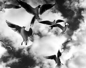 SEAGULLS #4 SW photography fine art from 10 x 10 cm Seagull Black and White Photography