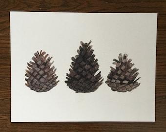 Pinecones Watercolour Print