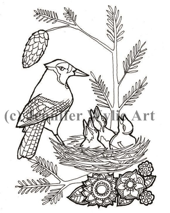 jay jay coloring pages - realistic blue jay page coloring pages