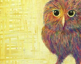 Nosey Owl